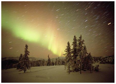 Stars And Trees, Northern Light