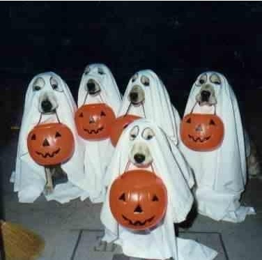 Halloween Hidden Bassets