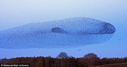 -Starlings Whale