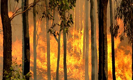 A-Bushfire-Burns