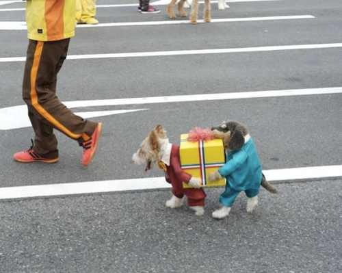  1 Dog Or Two Carrying Gift