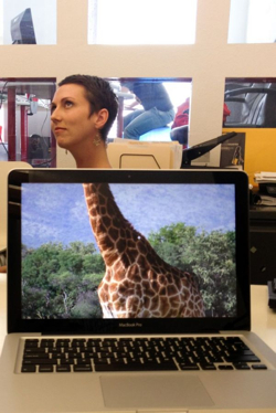Desk Safari Giraffe