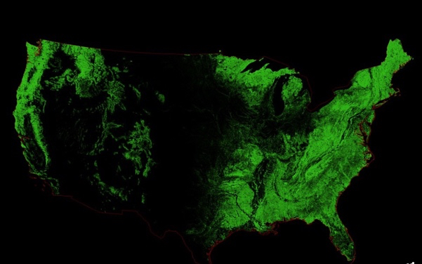 Forests Over Us