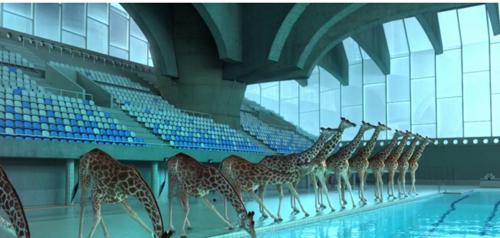 High-Diving Giraffes