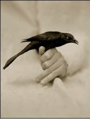 Bird In Hand Victor Schrager-1