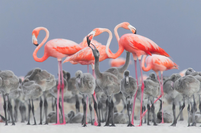 Flamingos Photy