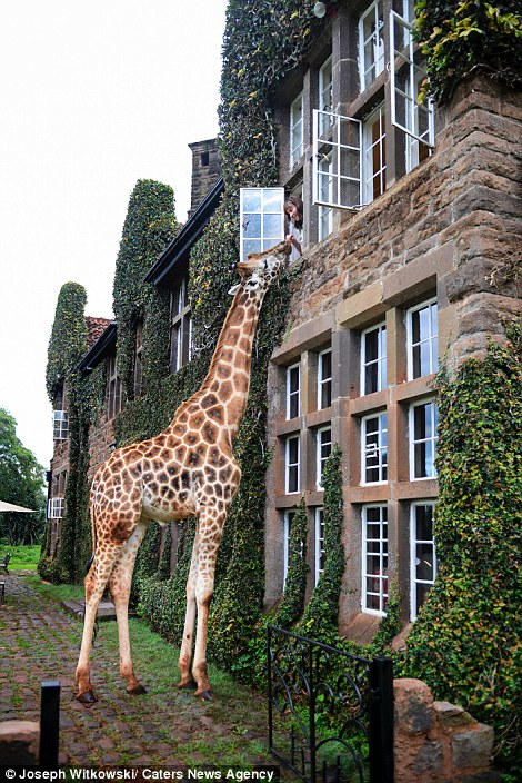 Giraffe Fed Upper Story Manor