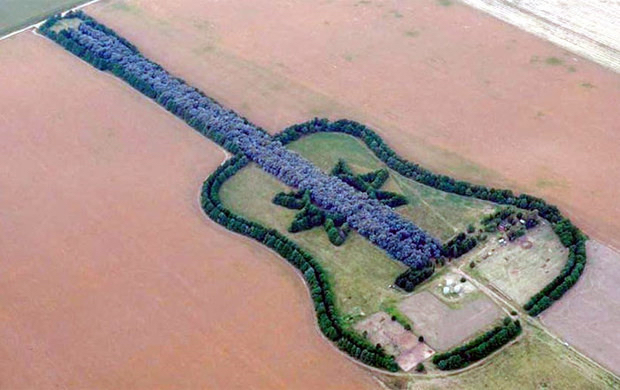 Guitar Forest