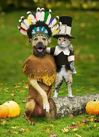 _thanksgiving-dog-cat.jpg
