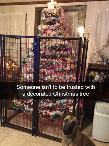 Funny-Christmas-Tree In A Cage