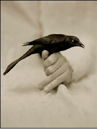 Bird In Hand Victor Schrager