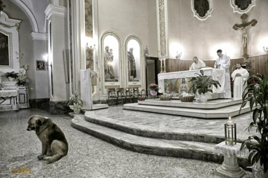 -Loyal Dog Attending Mass