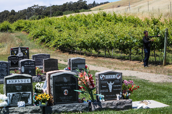 -Vineyard Cemetery