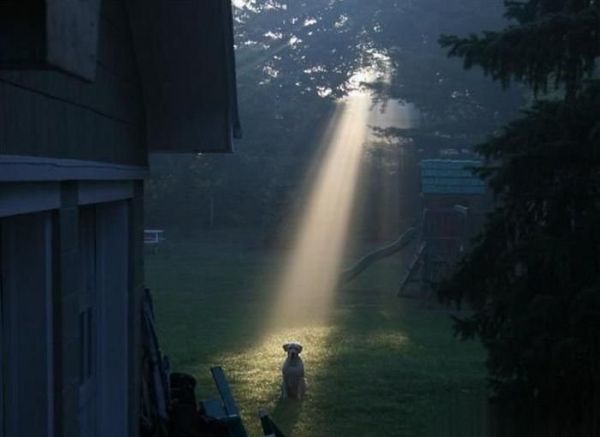Dog In Lightbeam-1